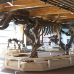 Beringia Interpretive Centre Whitehorse Yukon