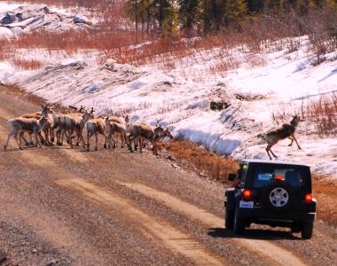 Denali Jeep Excursions