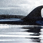 LuLu Belle / Glacier Wildlife Cruises Valdez Alaska