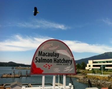 The Macaulay Salmon Hatchery