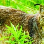 Yukon wildlife preserve in whitehorse yukon
