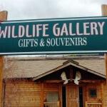 Yukon wildlife gallery teslin yukon